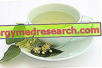 Mengeringkan teh herbal untuk menurunkan berat badan
