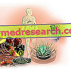 Bachi lilled: terapeutilised alused