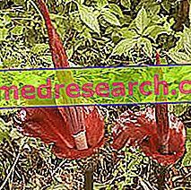 हर्बल दवा में कोंकण: कोंकण की संपत्ति