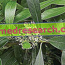 Matè in Herbalist: Fastighet av Matè