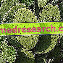 Opuntia في Erboristeria: خاصية Opuntia