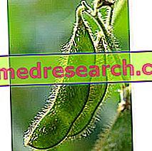 La soja en la medicina herbaria: Propiedades de la soja