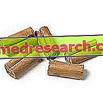 Ceylon-kaneli herbalistissa: Ceylon-kanelia