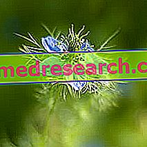 Nigella di Herbalist: Properti Nigella