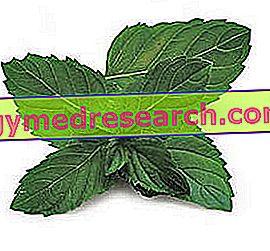 Slaba prebava: Naravna zdravila