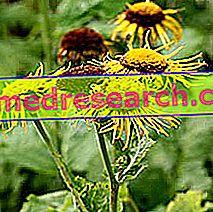 Elenio Herbalistissa: Elenion omaisuus