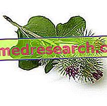 Burdock in Herbalist: Egenskaber af Burdock
