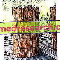 Uncaria in Herbalist: Nepremičnina Uncaria