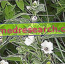Altea i Herbalist: Eiendom av Altea