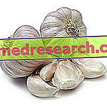 Hvitløk i urtemedisin: Egenskaper av hvitløk