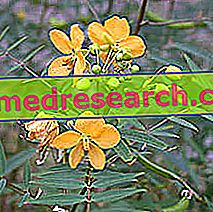 Bitkisel Tıpta Senna: Seine'nin Mülkiyeti