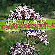 Piscidia i Herbalist: Egenskap av Piscidia