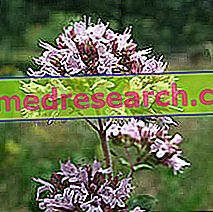 Piscidia in Herbal Medicine: Собственост на Piscidia