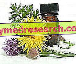 Colesterol alto: remedios herbales