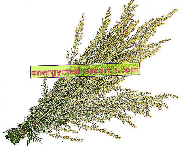 Simbolika Artemisia