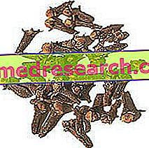 Карамфил в билковата медицина: Свойства на карамфил