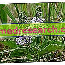 Veronica in Herbalist: Власність Вероніки