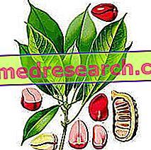 Cola i Herbalist: Egenskapen til Cola