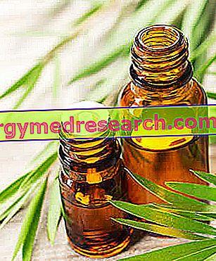 Melaleuca Oil - tējas koka eļļa Ēteriskā eļļa
