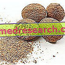 Muškatni orešček v zeliščni medicini: lastnosti muškatnega oreščka