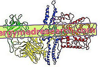 Bir ilaç olarak Botulinum toksini: Ne için?  Ne zaman kullanıyorsun  I.Randi'nin yan etkileri ve kontrendikasyonları