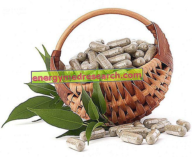 Antibióticos de origem vegetal