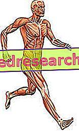 Втомленість м'язів