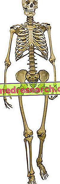 kaukolė su hipertenzija)