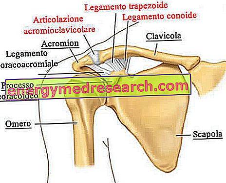 boli ale sternului articulației claviculare