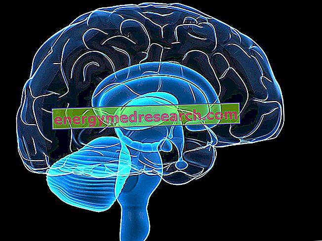 دماغ: بعض الأرقام المثيرة للاهتمام