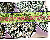 Flora bacteriana humana