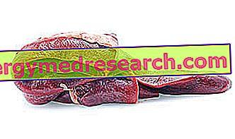 Σπλήνα ως τροφή του R.Borgacci