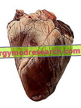 قلب بوفينو من قبل R.Borgacci