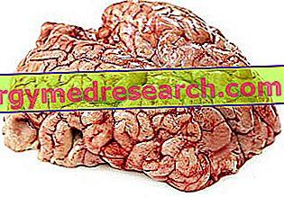 Hjernen som mad af R.Borgacci