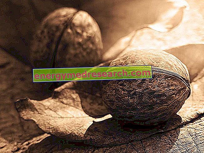 Soorten walnoot