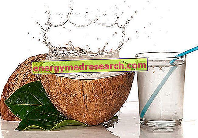 kokoso palmių širdies nauda sveikatai