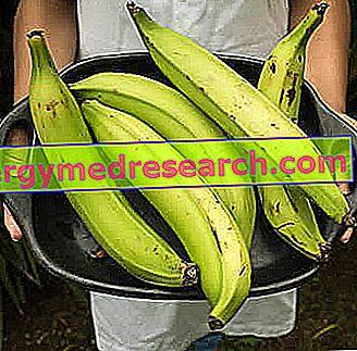 プレーンフルーツ - 料理用バナナ