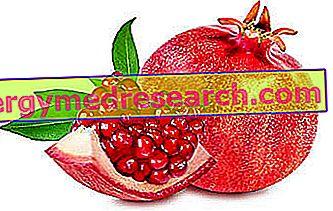 Granada: Propiedades nutricionales, uso en la dieta, papel en la cocina y notas de botánica por R.Borgacci