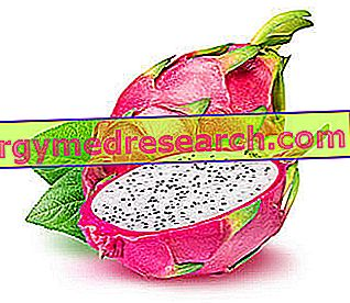 Frucht des Drachen: Ernährungseigenschaften, Rolle in der Ernährung und Hinweise zur Botanik von R.Borgacci