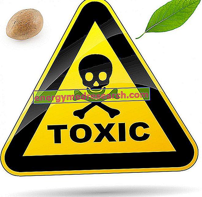 Avokado-laitoksen eläinten toksisuus