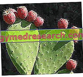Prickly Pear - Propriedades e Informação nutricional
