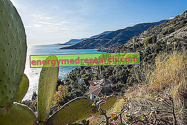 Φραγκόσυκα, τρόφιμα στη Μεσόγειο