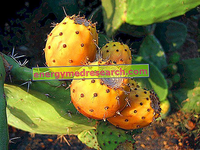Pickly Pear Spines: Kako jih odstraniti iz kože?