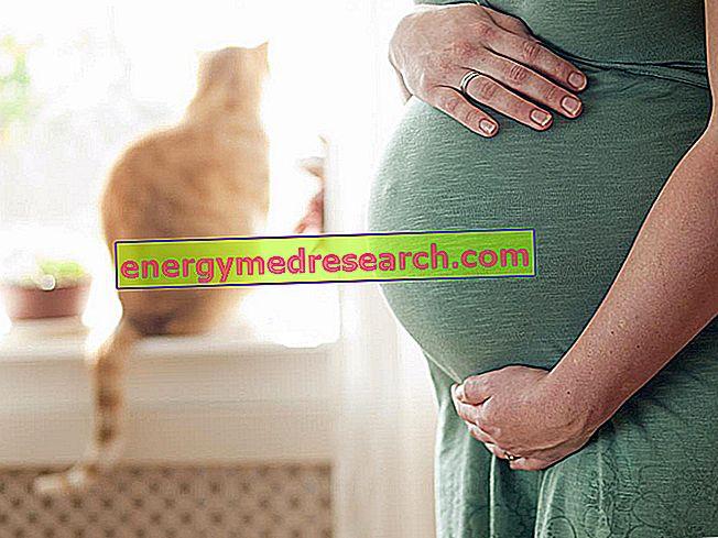 Toksoplazmoza: rizici za trudnice