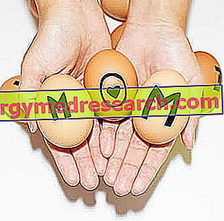 Egg donation - Oocyte donation