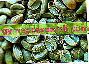 Žalios žalios kavos ir gastrito