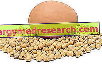 fosfatidylserin