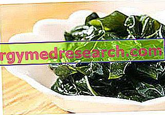 Wakame: Lastnosti alge Wakame