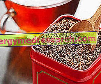 Rooibos - Fordele og egenskaber ved rød te
