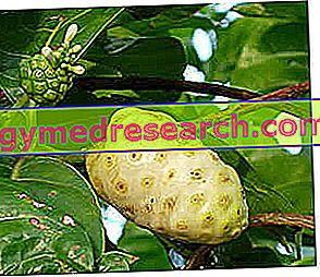 عصير النوني: المكونات ، والآثار الجانبية ، موانع